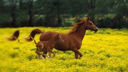 Download Wild Horse Free Desktop Background # 3 Full Size 664