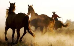 1280x800 Wild Horses and Cowboy desktop PC and Mac wallpaper 1129