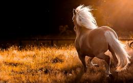 name nature running wild horses widescreen desktop wallpaper download 965