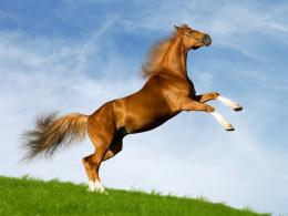Horses High Quality Widescreen Of Wild Wallpaper, Desktop Wallpaper 154