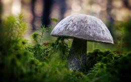 Wild mushroom photography wallpaper Plant desktop background 507