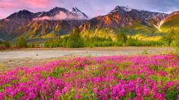 wild flowers mountain filed hd wallpapers new desktop widescreen 592