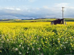 landscape backgrounds wild flower field california wild flower field 1534