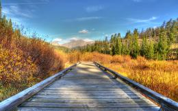 Wooden Footpath In Nature Hdr HD wallpapers 154