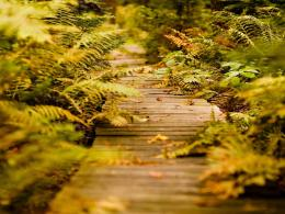 wallpaper title a wooden path in a fern wallpaper category nature your 877
