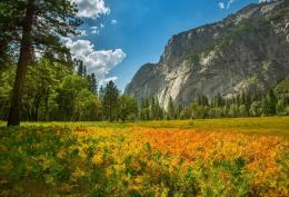Yosemite national park, nature, mountain, forest, plants wallpapers 1279