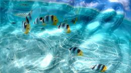 More Downloads Related to Watery Desktop 3D Screensaver 304