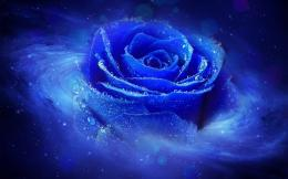 desktop 1280x800 hd cool 3d blue rose desktop wallpapers backgrounds 577