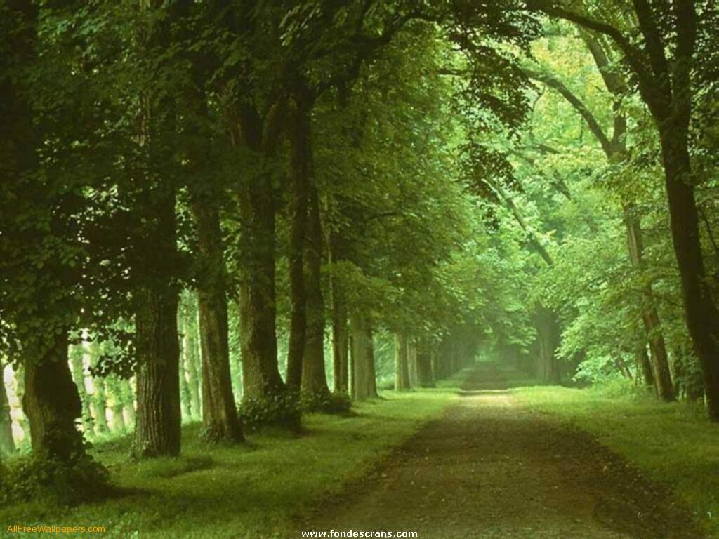 3d Nature Wallpapers | HD Wallpapers Arena by labs2 kentooz com 1364