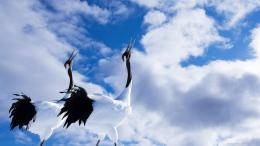Red Crowned Crane Bird Wallpaper picture 1139