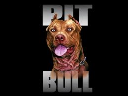 Pitbull Dogs Pit Bull Dog Breed Wallpaper with 1600x1200 Resolution 1526