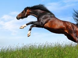 Arabian Horse Wallpaper 12550 Hd Wallpapers 1882
