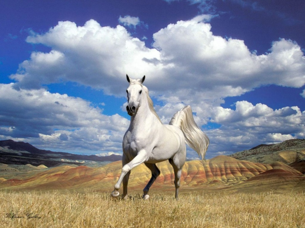 Arabian Horse Wallpaper 12448 Hd Wallpapers 194