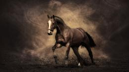 Arabian Racing Horse Desktop and make this wallpaper for your desktop 1902