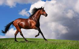 arabian horse wallpaper categories animals wallpapers 1122