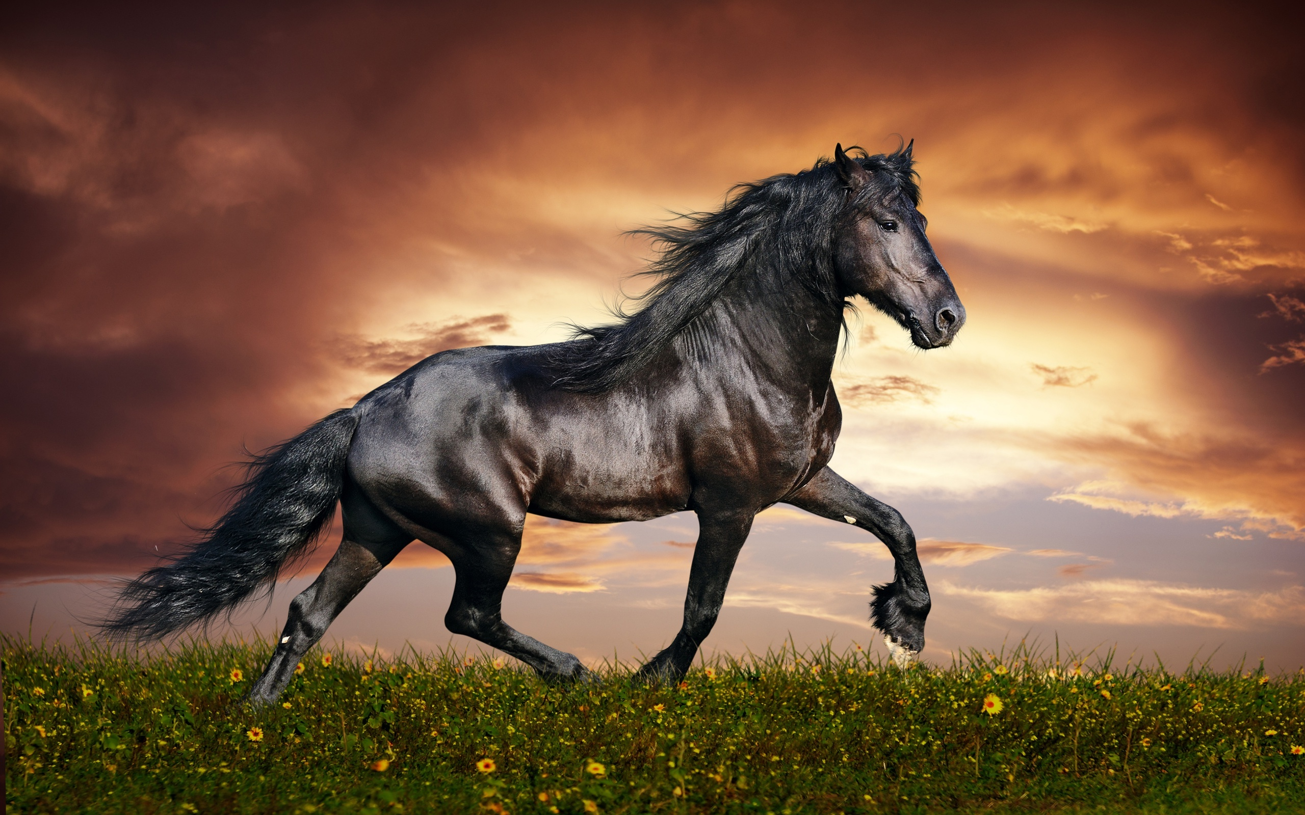 Dark Arabian Horse HD Wallpaper 1818