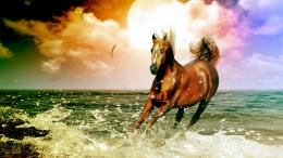 Arabian Horse Beach Desktop Wallpaper and make this wallpaper for your 1734