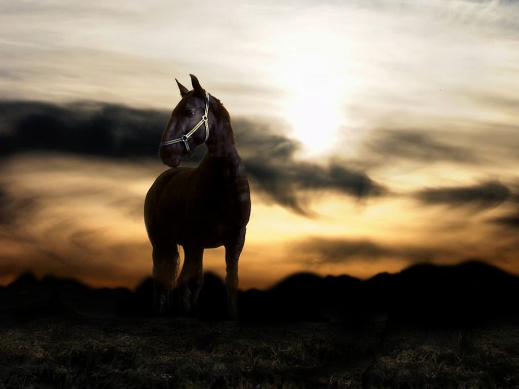 Arabian Horse HD Wallpapers 547