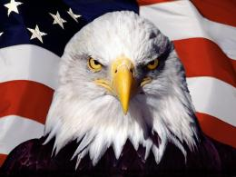 Bald Eagle Desktop Wallpapers 495
