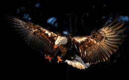 Wallpaper Abyss Explore the Collection Birds Eagles Bald Eagle 374153 240