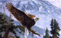 Bald Eagle Desktop Wallpaper Pictures 1128