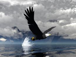 wallpapers bald eagle top images hd wallpapers full beautiful eagle 998