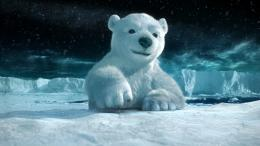Polar Bears HD Wallpaper 721