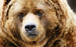 Huge Bear Wallpapers Pictures Photos Images 376
