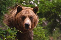 Grizzly Bear Hd Free Wallpaper with 2048x1360 Resolution 669
