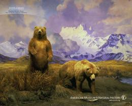 Bears! Bear Wallpaper 1045