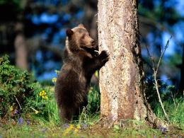 Bear HD Wallpapers 114