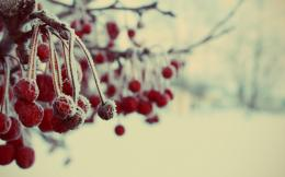 Image: Frozen Berries wallpapers and stock photos 1591