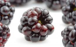 black berry fruit wallpapers Black Berry Fruit Wallpapers 190