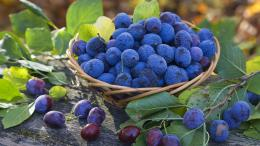 Fruits Blue Berry Fruit Hd Wallpaper with 1920x1080 Resolution 421