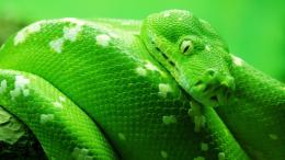 big snake hd wallpapers lovely desktop background images widescreen 922