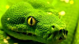 python snake background photo python snake hd wallpaper red eye 1545