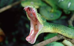 hd snake wallpaper with a attacking green snake wallpapers backgrounds 422