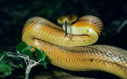 big snake hd wallpapers cool desktop background pictures widescreen 917