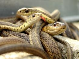 big snakes latest hd wallpapers 2013 big snakes latest hd 857