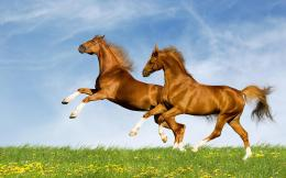 Running Horse HD Wallpaper Download 535