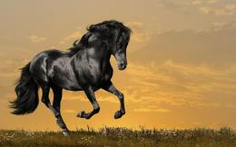 12 Amazing Black Horse Wallpapers HD 269