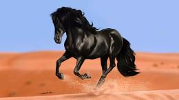 Black Horse HD Wallpapers 1354