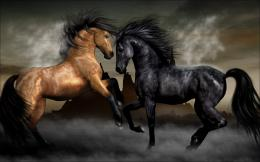 black and brown horse fighting HD wallpaper 279