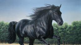 black horse high definition wallpapers cool desktop background images 457