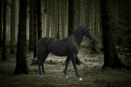hd wallpapers black horse hd wallpapers black horse hd wallpapers 1655
