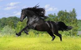 black horse hd wallpapers black horse hd wallpapers black horse hd 1787