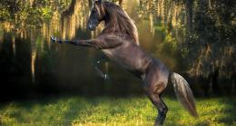 Beautiful Black Horse Kwicsys HD Wallpaper 1341