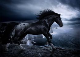 dark horse wallpaper background fantasy photo dark horse hd wallpaper 1888