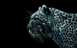 Leopard Wallpaper Hd wallpaper 488