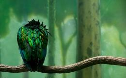 Hd Wallpaper Bird wallpaper 829
